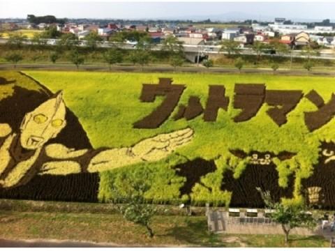 ビッグスケールの田んぼアートに感動!「行ってよかった!道の駅ランキング 2015」堂々の1位とは?