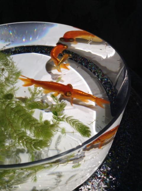爽やか&幻想的な日本の夏を指先に♡この時期ネイルチェンジするなら【金魚】モチーフがハズせない!!