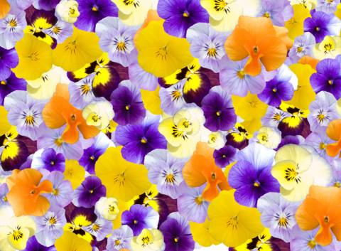 今年の春の注目デザイン!こんなにかわいいおおぶり花柄ネイル特集