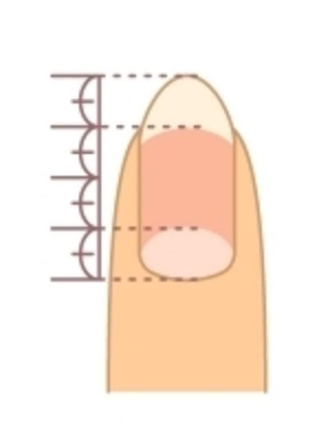 理想的な爪の長さ