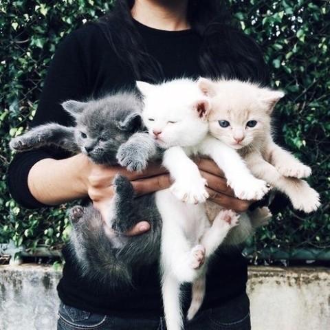 Kittens   We Heart It
