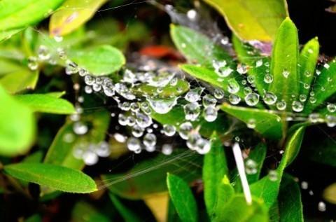 写真素材 足成:雨上がりの蜘蛛の巣