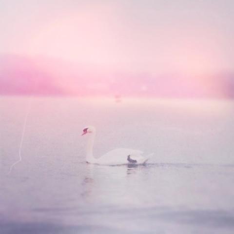 today's look|AMO オフィシャルブログ 「AMOSCREAM」 powered by Ameba by Sayaka♡н✬ | We Heart It