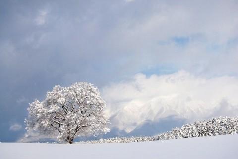 一本桜冬景色 平成21年1月21日: まー君の写真館
