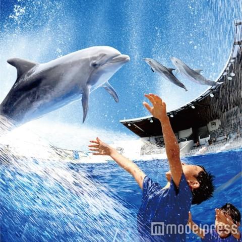 ずぶ濡れ必至!イルカと楽しむ新ウォータープログラムが京都水族館でスタート