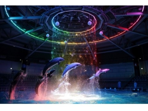 アクアパーク品川×Little Glee Monster(リトグリ)がコラボ!海の仲間たちによるカラフルポップな世界に魅了されよう