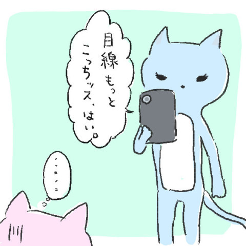 目線ください!猫の写真を撮るときのコツ