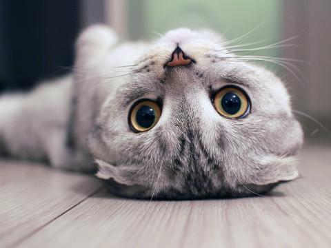 2017年もニャンコ。猫モチーフコスメ集めてみた