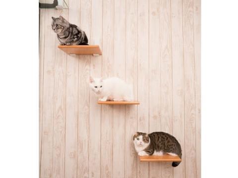 《9月9日》猫と暮らす賃貸アパート「キャリコ大森」入居者募集開始