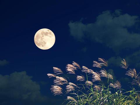 今日は十五夜。お月見したい相手でわかる、あなたの気配り力 #深層心理