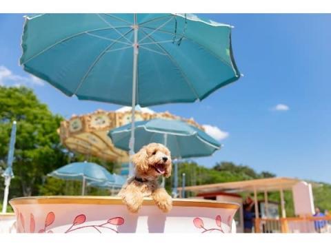 愛犬を撮りまくり!「いぬPHOTOフェスタin那須ハイ」開催