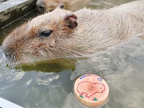 カピバラ温泉に癒されたら、自慢の日帰り天然温泉もENJOY!
