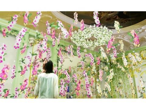 国内最多200品種!ハウステンボスで「大胡蝶蘭展」開催