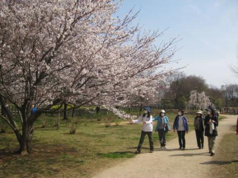 狭山丘陵の自然を堪能!「春のうららかウォーキング」開催