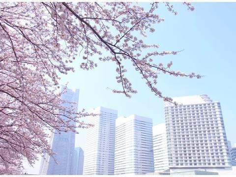 部屋でお花見!横浜ベイホテル東急の宿泊プラン「さくら日和」