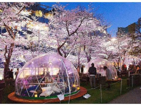 満天の桜と美味しい食事をドーム型テントで楽しもう