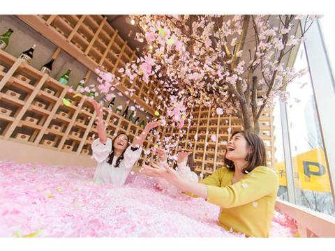 """桜の花びらに埋もれる!""""インドア花見""""で佐賀の名産品を堪能"""