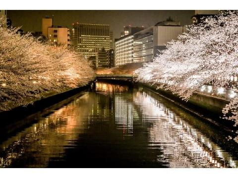 江戸情緒あふれる深川エリアで今年も「さくらまつり」開催!