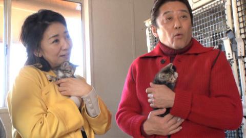 """キンプリ髙橋海人も興奮!""""噂の黒猫""""を追跡&4万匹の猫を救った1人の女性"""
