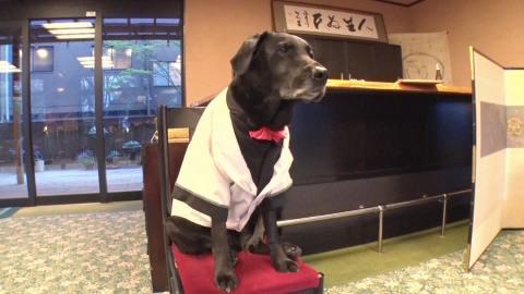 """キンプリ髙橋海人が""""エスパー犬""""ハルクと対面!驚異の透視能力に「これはすごい」"""
