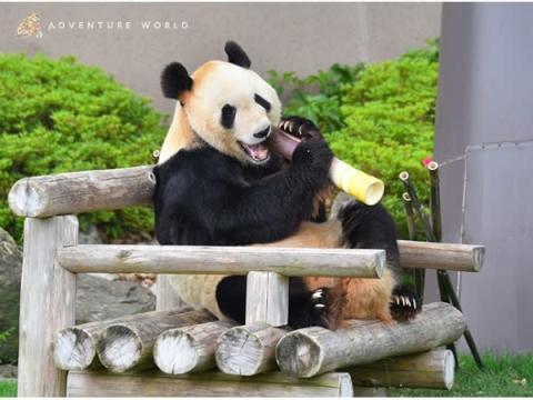 父の日に15頭のお父さんパンダ「永明」へプレゼントを贈呈!