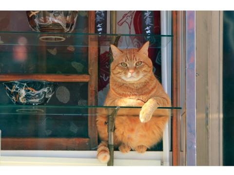 横浜開催が決定!猫の写真&グッズ展「ねこがかわいいだけ展」