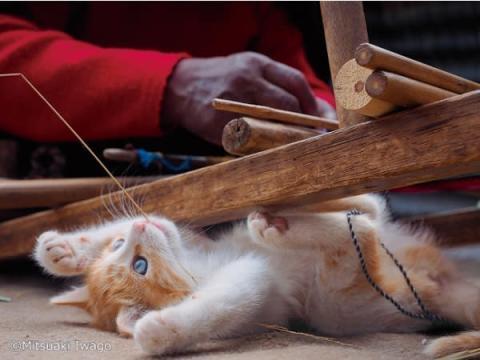 動物写真家・岩合光昭の新作写真展『こねこ』京都で開催中