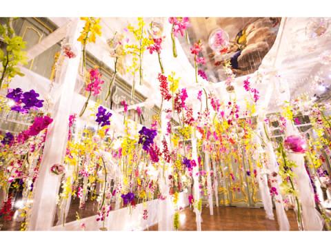 国内最多200品種の蘭で染まる世界!ハウステンボスで「大胡蝶蘭展」開催