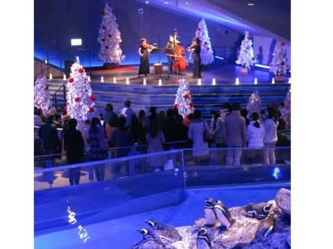 「すみだ水族館」で家族もカップルも楽しめるクリスマスミニライブ開催!