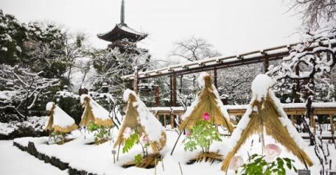 40品種200株が楚々と咲く!上野東照宮で冬ぼたん&江戸風情を堪能しよう
