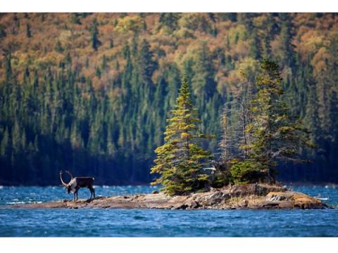 北米大陸「ノースウッズ」の知られざる森と湖の世界を写真で魅了