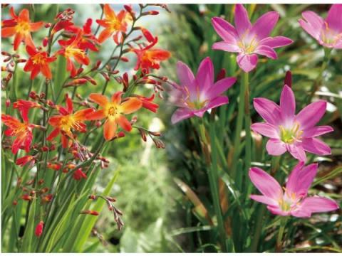 ガーデニング初心者必見!ほったらかしでも花を咲かせる球根シリーズが登場