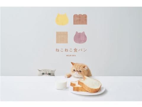 可愛くて食べられない?ミルキーでもっちり「ねこねこ食パン」が豊田に登場