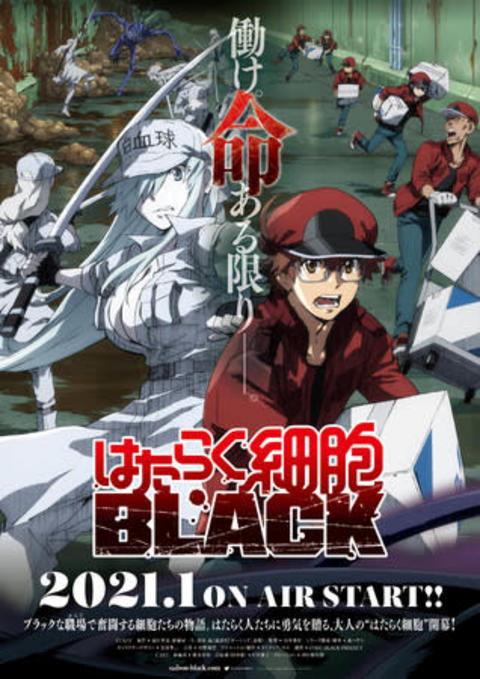 TVアニメ 『はたらく細胞BLACK』 第1弾PV解禁! 【アニメニュース】