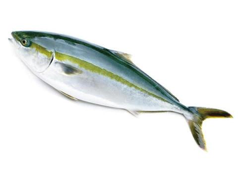 香川県のブランド魚「オリーブハマチ」解禁!プレゼントキャンペーンも開催