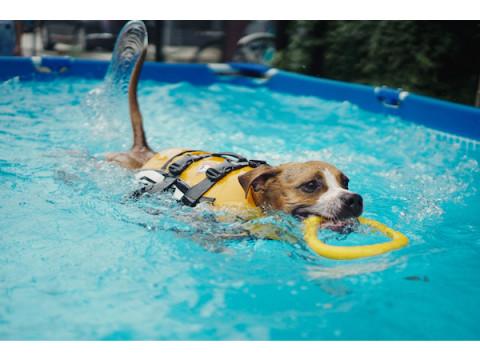 愛犬と最高の思い出を作ろう!大人気イベント「DOG POOL PARTY」開催
