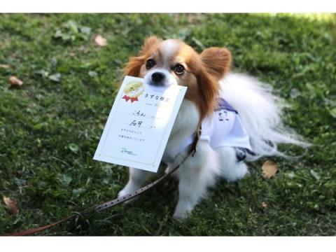 メッツァビレッジでワンちゃんと飼い主が一緒に楽しめるイベントを開催!