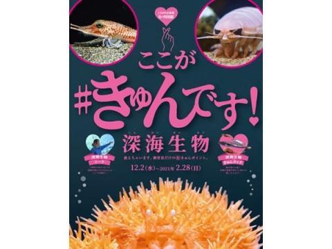 「しながわ水族館」冬の特別展、「ここが#きゅんです! 深海生物」開催中