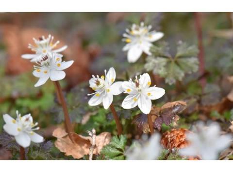 早春の息吹を感じよう!「六甲高山植物園」が冬季特別開園&プレオープン