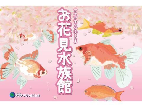 """""""桜金魚""""の特別展示も!「アクアマリンふくしま お花見水族館」で春を満喫"""