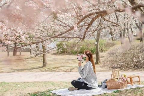 韓国のお花見、定番の楽しみ方!「丸ごとレンタル」と「ペダル」【ハングクTIMES Vol.2】