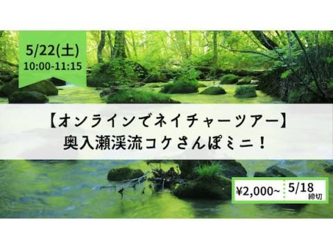 """青森県の奥入瀬渓流で""""コケさんぽ""""を楽しむオンラインツアーが開催!"""