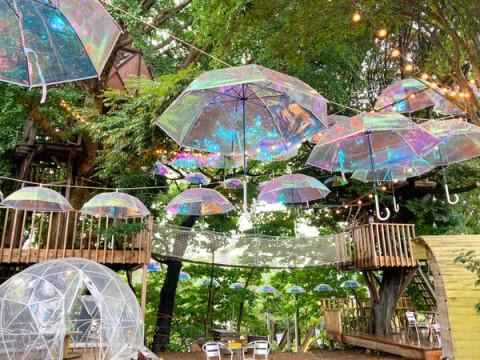 オーロラビニール傘が上空を彩る!ツリーハウスカフェ・椿森コムナ×Wpc.のコラボ企画