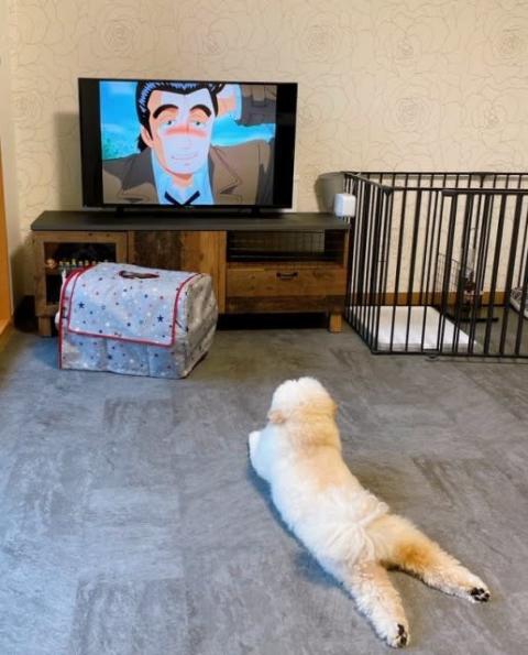 夏休み中の小学生のよう…ゴロ寝しながらアニメを見る犬に反響「人間が中に入っているんですか?」