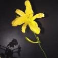山田ゆかりんさんの顔写真
