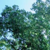 季節の匂い 変わりめ目