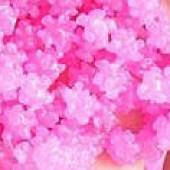 桜の下で...〆
