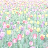 濡  擾 🌷 の お 花 畑