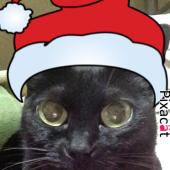 黒猫ぷうちゃんですよ(^^)