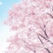桜舞うとある本丸にて